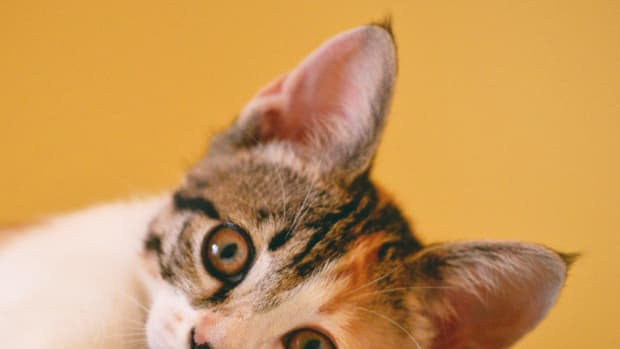how-to-get-rid-of-cat-urine-odour