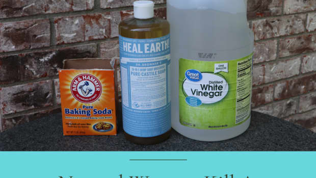 how-to-get-rid-of-ants-without-toxic-chemicals