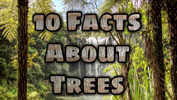 10-interesting-facts-about-trees