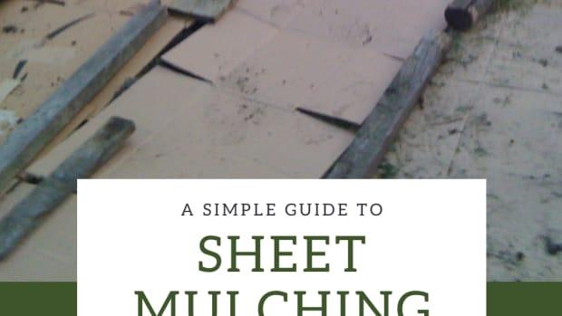 make-a-new-garden-bed-with-sheet-mulching