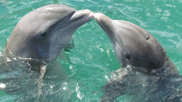 what-do-you-know-about-dolphins-is-dolphin-a-mammal
