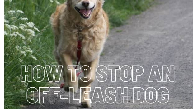 how-to-stop-an-off-leash-dog-from-approaching-your-dog