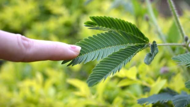 do-plants-have-feelings-in-a-sense-yes