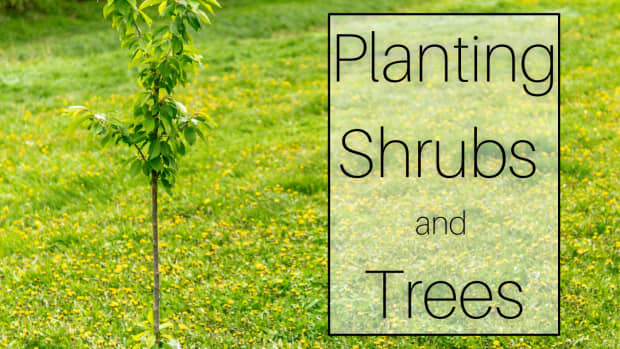 how-to-plant-a-tree-or-shrub