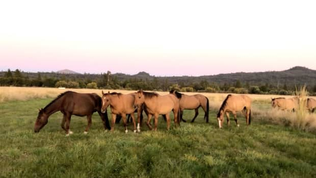 the-wind-of-change-for-wildhorses-and-burros