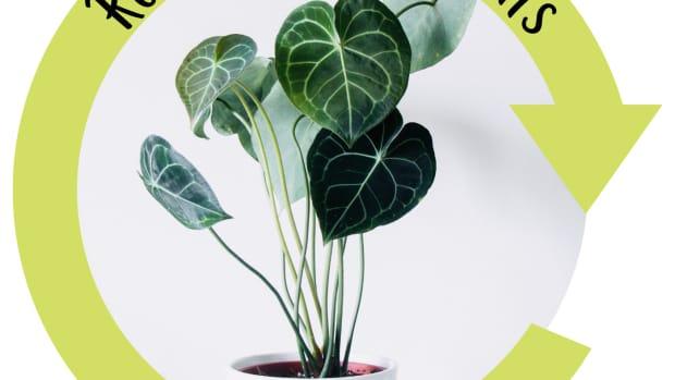 importance-rotating-houseplants