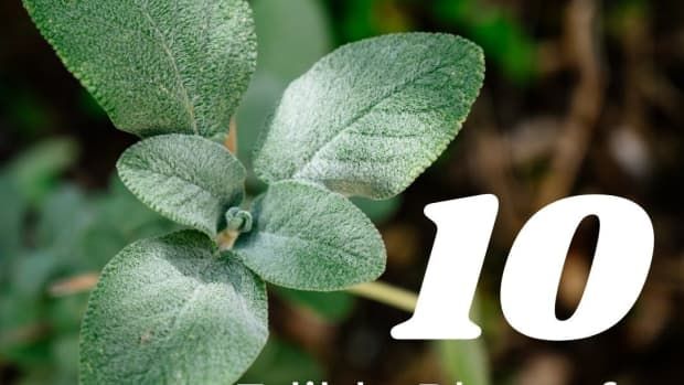 10-edible-plants-for-early-spring