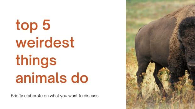 top-10-weirdest-things-animals-do