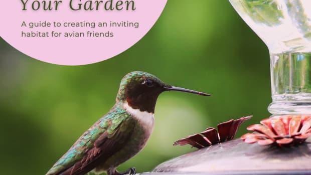bringing-birds-to-the-garden