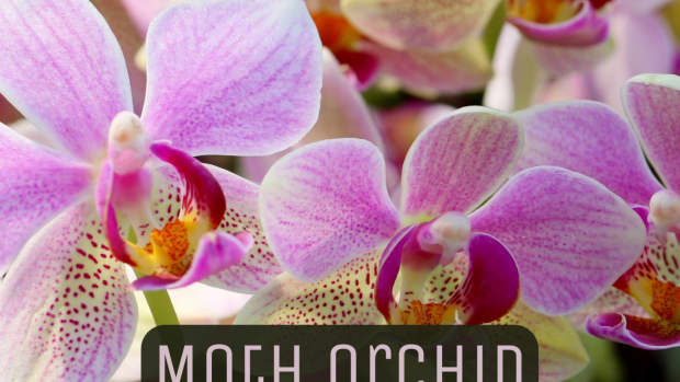 diana-and-daniella-an-orchid-love-story