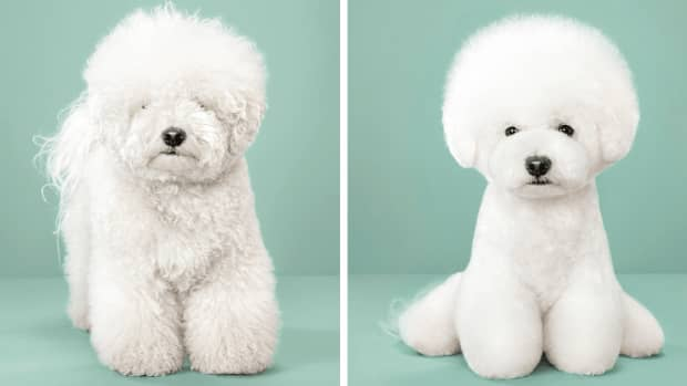 how-to-avoid-excessive-shedding-in-dogs-easy-and-simple-hacks
