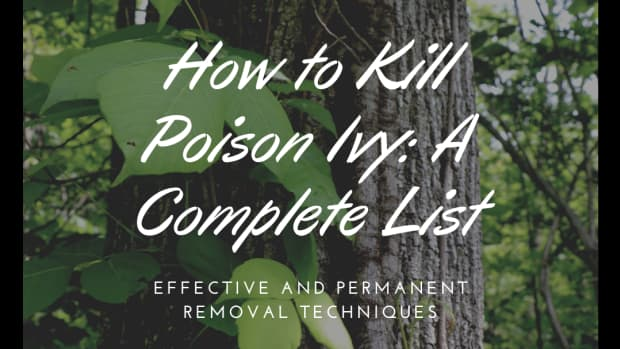 how-to-kill-poison-ivy-a-complete-list-of-methods-and-tips
