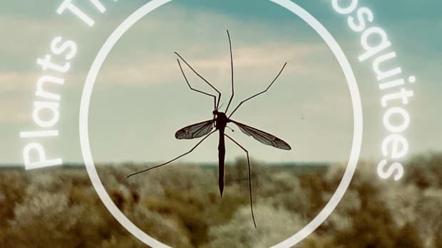 repel-mosquitos-naturally