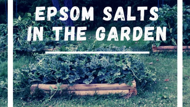 what-can-epsom-salts-do-for-your-plants