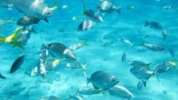 the-top-3-snorkeling-spots-in-florida