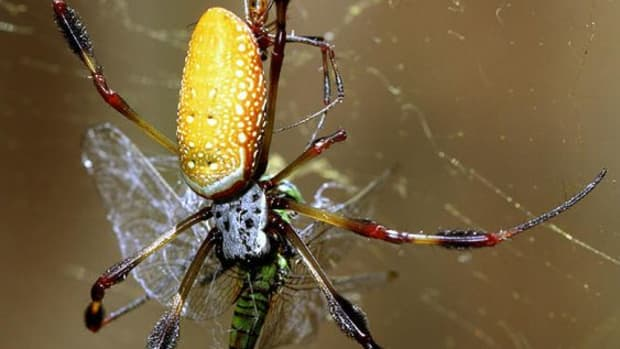 is--spider-silk-capable-of-healing-the-human-body