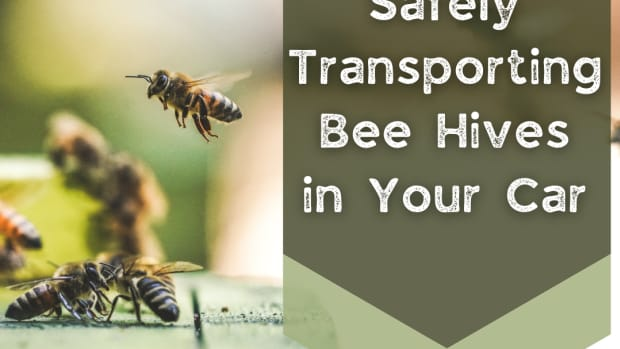 safely-transporting-bee-hives-in-your-car
