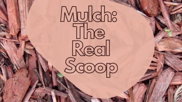mulch-the-real-scoop