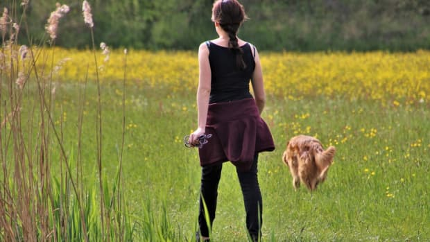how-to-lose-weight-by-walking-your-dog