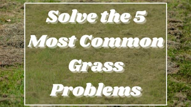 grass-problems