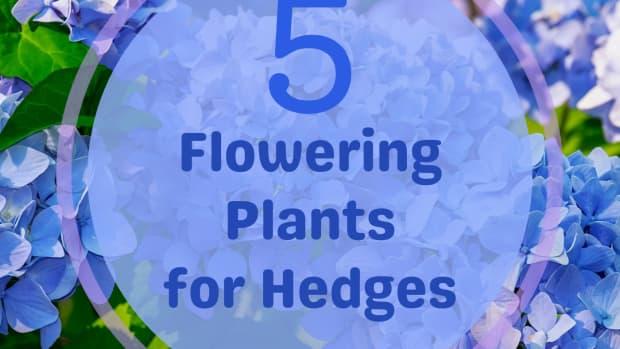 ornamental-flowering-hedge-plants