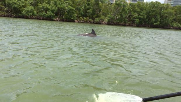dash-a-bottle-nose-dolphins-poem