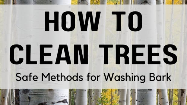clean-trees-how-to-wash-tree-bark