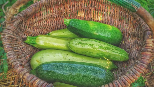 sneak-some-zucchini-onto-your-neighbors-porch-day