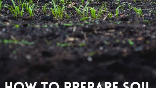 how-to-prepare-soil-for-planting-and-growing-a-healthy-vegetable-garden
