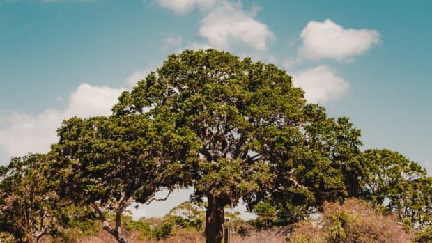 tips-for-planning-a-family-safari-in-sri-lanka