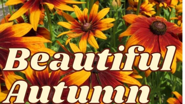 best-fall-flowers-for-autumn-color-themes