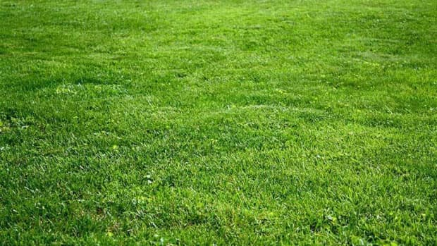 grass-seed-planting-in-ohio