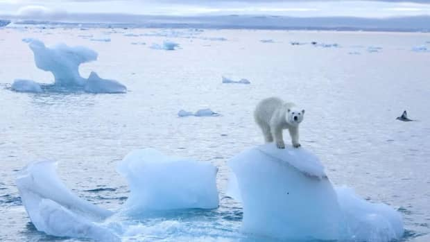 what-is-a-blue-ocean-event-and-how-will-it-impact-global-climate