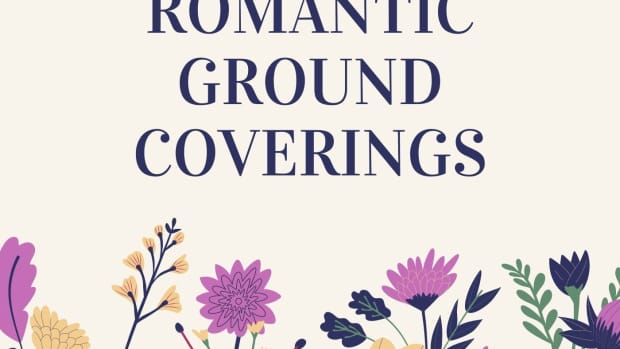ground-coverings-bring-romance-to-the-garden