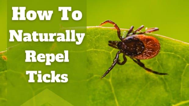 how-to-repel-ticks-naturally