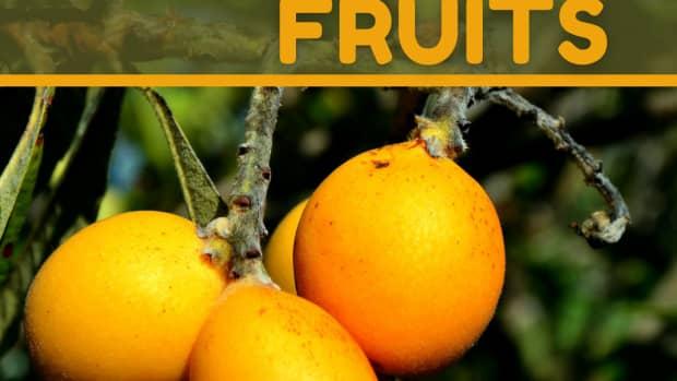 loquat-tree-benefits-of-loquat-fruits