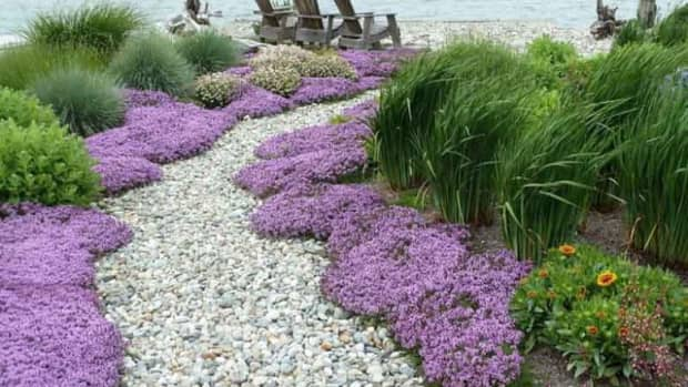 5-low-maintenance-ground-cover-plants