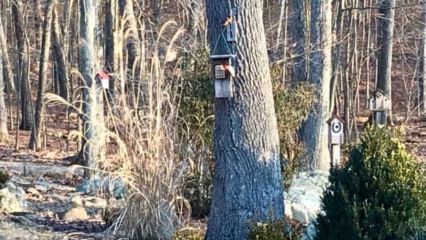 winter-bird-feeding-tips