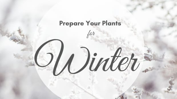 bringing-houseplants-indoors-for-the-winter-10-tips-for-preparing-indoor-plants-for-healthy-winter-living