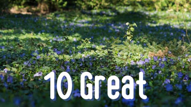 ten-perennial-groundcovers