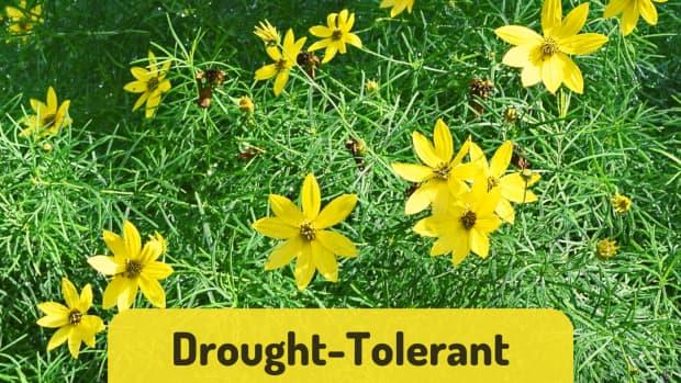 pretty-drought-tolerant-ground-covers