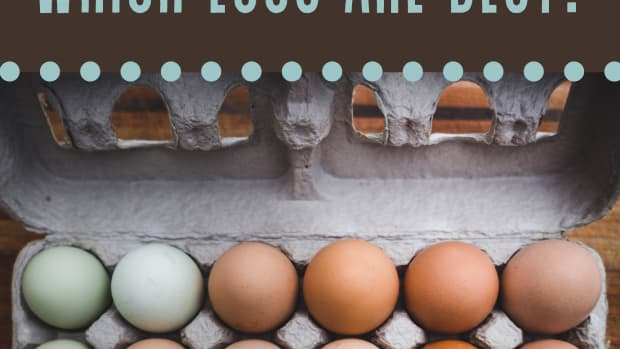 how-to-buy-the-healthiest-eggs