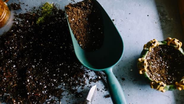 organic-vs-non-organic-soil