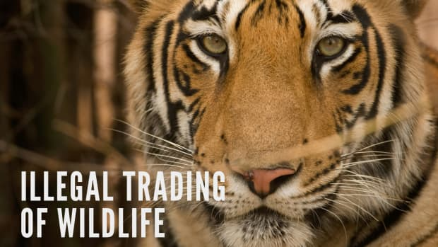 wild-life-trading-illegal-trading-of-wild-life
