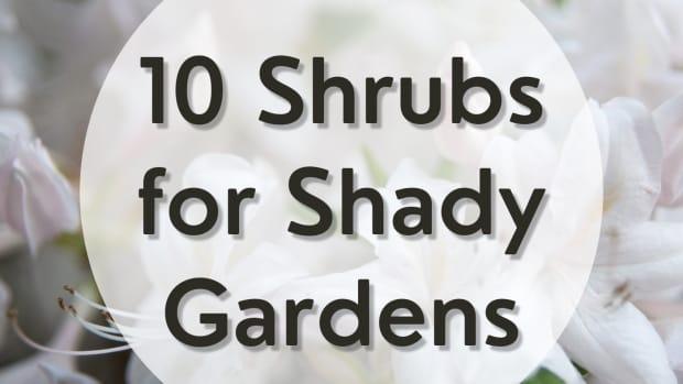 shadeshrubs