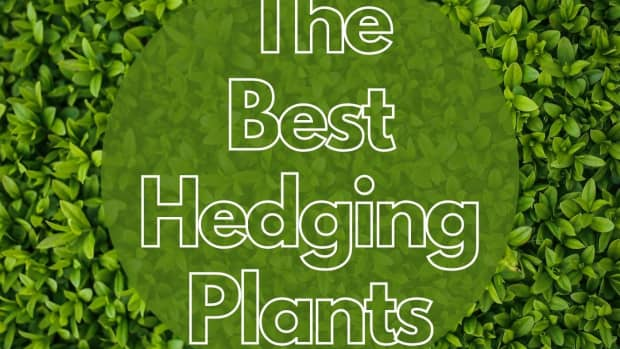 best-hedging-plants