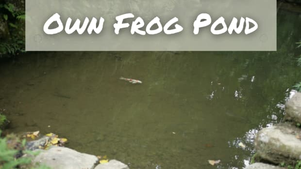 how-to-make-a-frog-pond