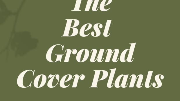 low-maintenance-groundcovers-that-suppress-weeds
