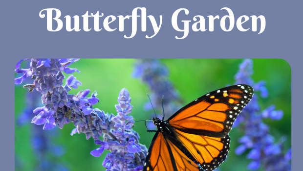 how-to-attract-butterflies-to-your-garden-with-both-plants-and-fruit