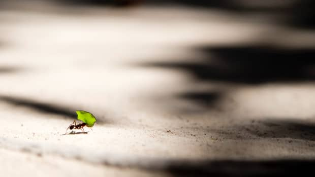 get-rid-of-ants-in-your-driveway-and-yard